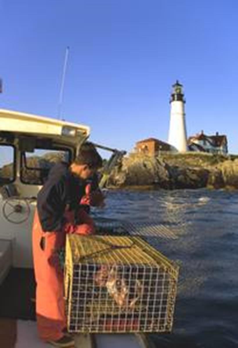 Lobster Catching
